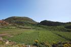 Terreno per vigneto Lipari - Terreno per vigneto nel cratere della fossa del Monte nell'isola di Lipari