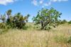 Terreni agricoli Quattropani