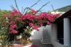 giardino / entrata appartamento efesto